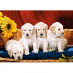 Puzzle  Castorland-101771 Vier süße Hundbabys