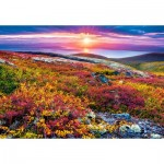 Puzzle  Castorland-103539 Northern Palette