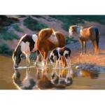 Puzzle  Castorland-52097 Pferde am Fuss