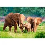 Puzzle  Castorland-52196 Elefantenfamilie