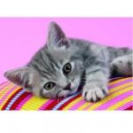 Puzzle  Clementoni-30362 Kleines graues Kätzchen