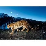 Puzzle  Clementoni-39376 National Geographic - Schneeleopard