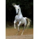 Puzzle  DToys-65988-PH01 Weißes Pferd
