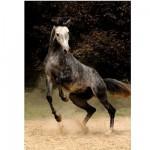 Puzzle  DToys-65988-PH02 Geflecktes Pferd