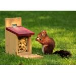 Puzzle  Grafika-Kids-00653 Magnetische Teile - Eichhörnchen