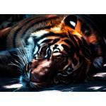 Puzzle  Grafika-Kids-00961 Tiger