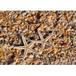 Puzzle  Grafika-Kids-01233 Muscheln und Seestern