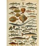 Puzzle  Grafika-00600 Illustration du Larousse pour Tous: Poissons, XIXè Siècle