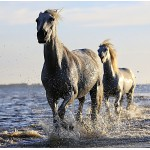 Puzzle   Pferde