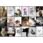 Puzzle  Grafika-T-00100 Collage - Kätzchen