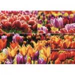 Puzzle   Holländische Tulpen