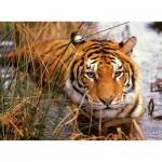 Puzzle  Nathan-87168 Tiger auf der Lauer