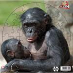 Puzzle  PuzzelMan-309 Bonobos Affen