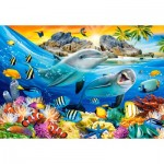 Puzzle   Dolphins in the Tropics