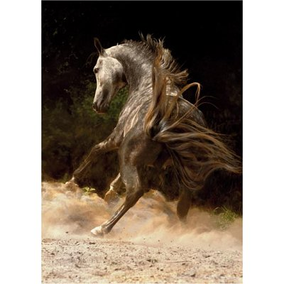 Puzzle DToys-65988-PH03 Wildes Pferd