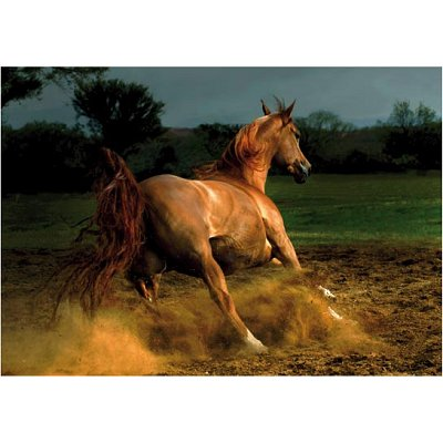 Puzzle DToys-65988-PH04 Galoppierendes Pferd