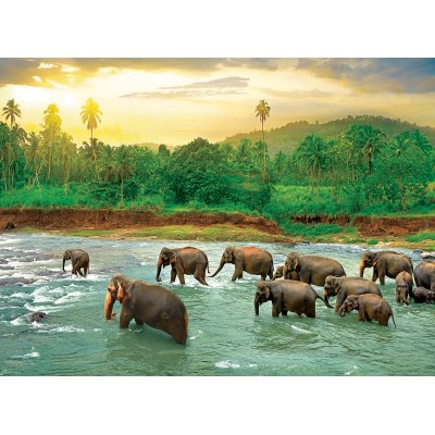 Puzzle Eurographics-6000-5540 Save our Planet Collection - Regenwald