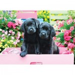 Puzzle   XXL Teile - Black Labs in Pink Box
