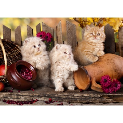 Puzzle Grafika-Kids-00321 Persian kittens