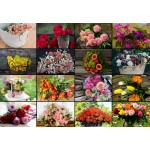 Puzzle  Grafika-Kids-01939 Collage - Blumen