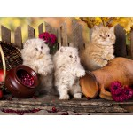 Puzzle  Grafika-01142 Persian kittens