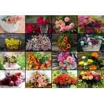 Puzzle  Grafika-02569 Collage - Blumen