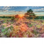 Puzzle   Heather bei Sonnenuntergang