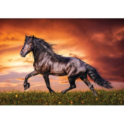 Puzzle KS-Games-10105 Black Beauty