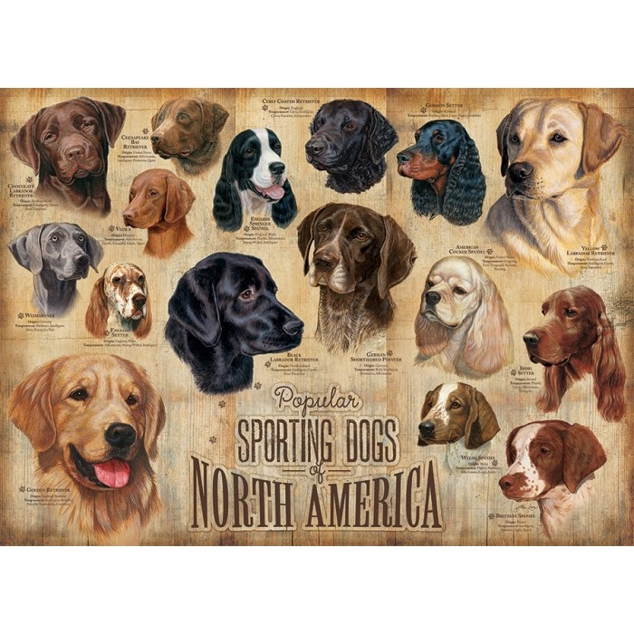 cobble-hill-outset-media-sporting-dogs