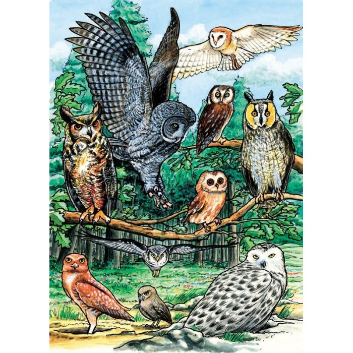 cobble-hill-outset-media-north-american-owls