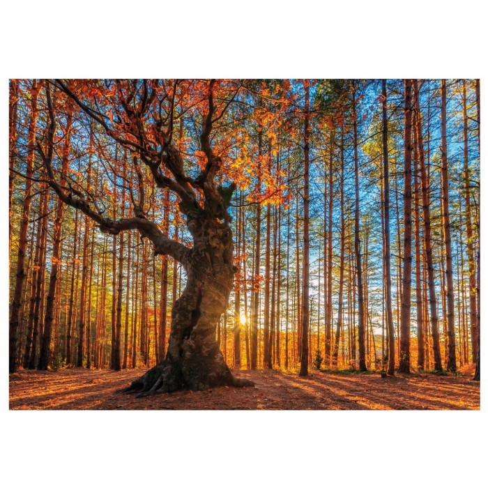 wentworth-holzpuzzle-the-king-of-the-forest