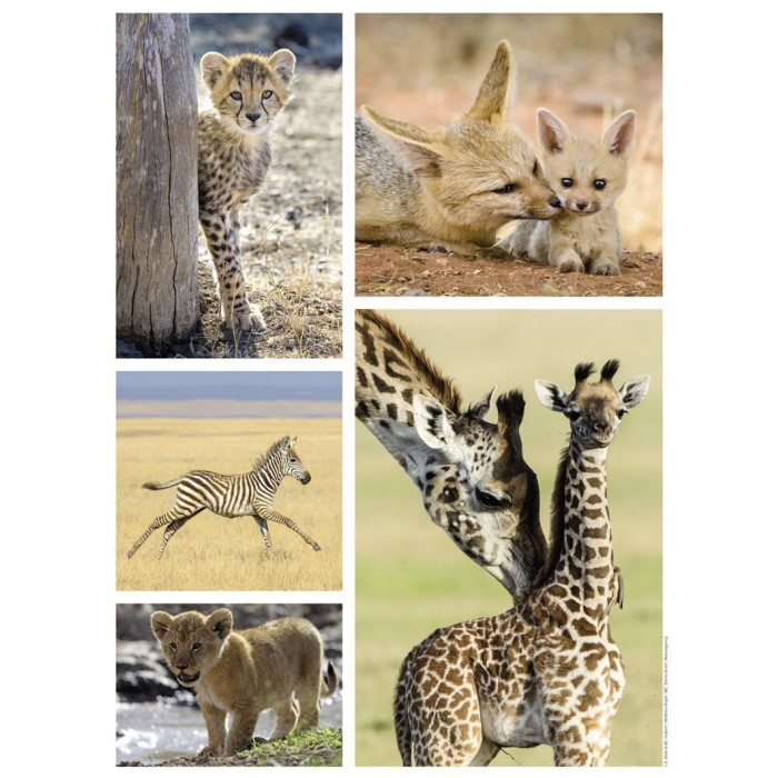 nathan-wilde-tiere-babys