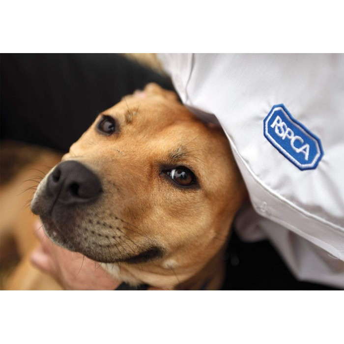 gibsons-rspca-puppy-love