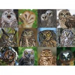 Puzzle  New-York-Puzzle-CB2085 Owls and Owlets