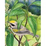 Puzzle   Golden-winged Warbler Mini