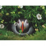 Puzzle   Puffin Chick