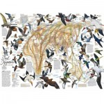Puzzle  New-York-Puzzle-NG1830 Eastern Bird Migration