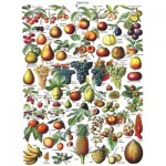 Puzzle  New-York-Puzzle-PD1919 Fruits