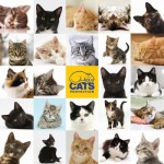 Puzzle   Cats Protection