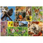 Puzzle   RSPB - Great British Wildlife