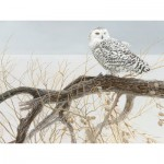 Puzzle  Cobble-Hill-52084 XXL Teile - Fallen Willow Snowy Owl