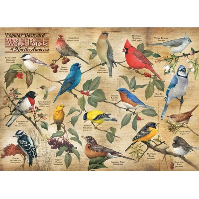 Puzzle Cobble-Hill-80024 Popular Backyard Wild Birds of N.A.