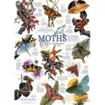 Puzzle   Moth Collection