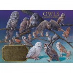 Puzzle   Owls of North America
