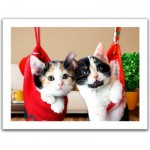 Pintoo-H1387 Puzzle aus Kunststoff - Christmas kittens