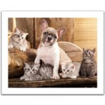 Puzzle aus Kunststoff - Little Kittens and A Dog