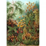 Puzzle-Michele-Wilson-A736-350 Holzpuzzle - Ernst Haeckel