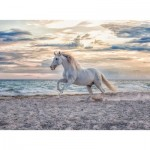 Puzzle   Horse on the Beach
